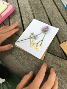 Buzymum - Fresh flowers on blotting paper, ready to press