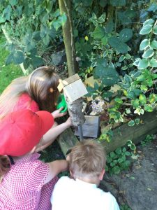 Buzymum - Finding bugs and housing them in the Bug Hotel