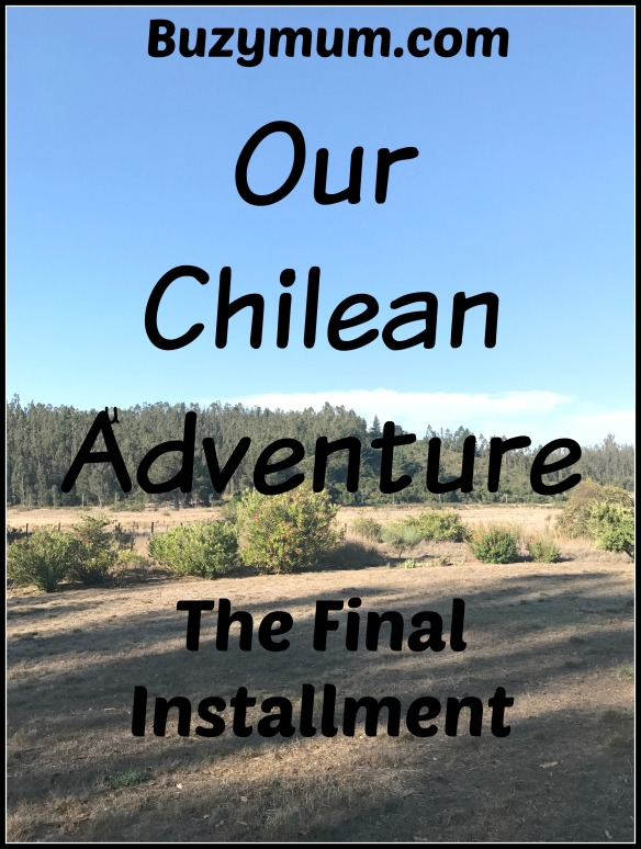 Buzymum - Our Chilean Adventure Final installment