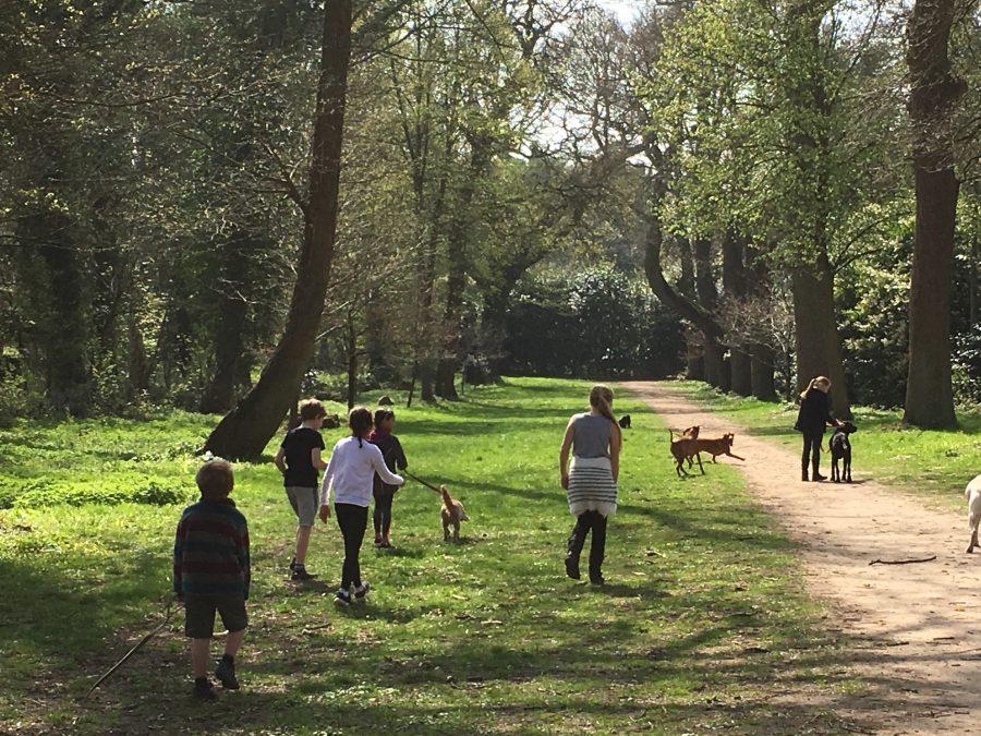 Buzymum - Cliveden woodland walk