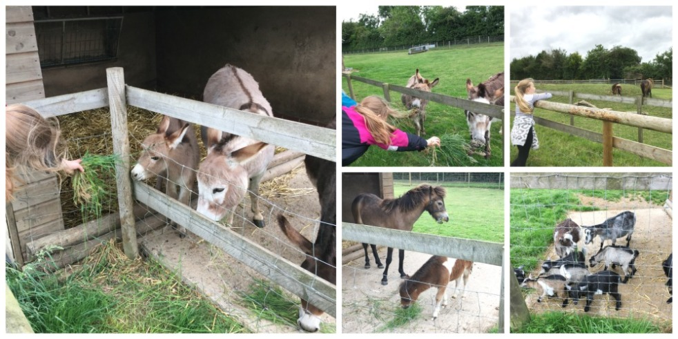 Buzymum - Lots of baby animals at Odds farm- born all year round!